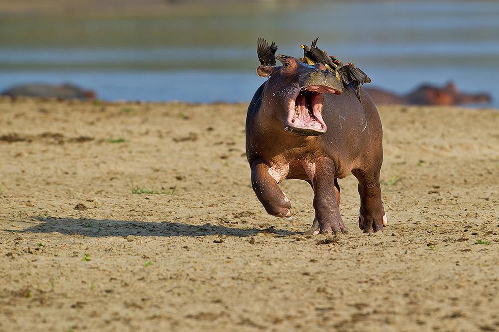 素材又有新表情了!图片喜感野生动物摄影奖微信有个男举手首届表情图片