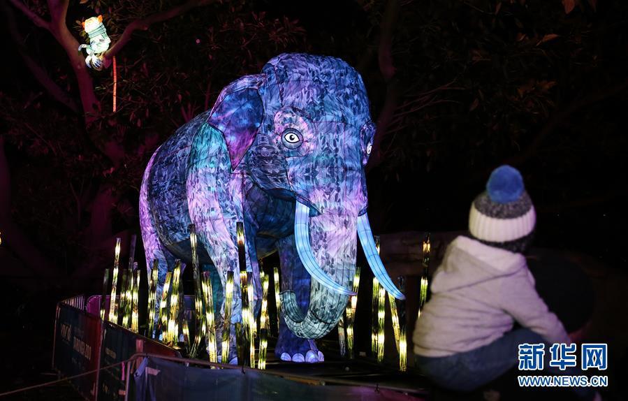 """悉尼舉行""""點亮野生動物之光""""燈光展"""